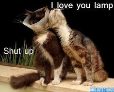 Most funny animal memes and humor pics 11