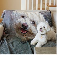OMG - this is killing me!  And I'll always have a soft spot for Bichons....... Shutterfly