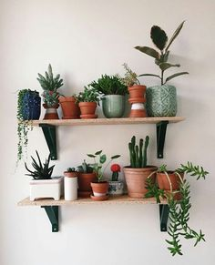 Indoor Plant Decor ideas are fun for people of all ages. You don't have to have a huge garden or your Indoor Plant Decor Ideas are perfect for small garden arrangements. There are many different plants that are suitable for… Continue Reading → My New Room, My Room, Dorm Room, Decoration Plante, Flowers Decoration, Decorations, Over Toilet, Plant Shelves, Shelves With Plants