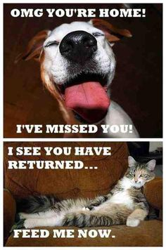 Difference between a cat and a dog