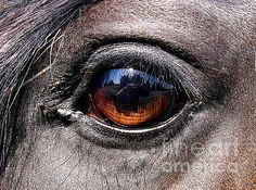 by Lkb Art & Photography COPYRIGHT NOTICE  All photographs and fine art on this web site are fully protected by U.S. and International Copyright laws, all rights reserved. photographing eye horse eye