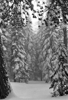 "the adventures of tartanscot™: ""Snow. White . . . """