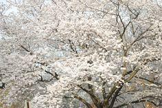 Snow flake tree