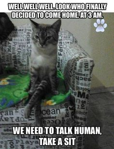 I feel like this is what my cat does haha meanwhile I'm wasted and just wanna cuddle with him!!