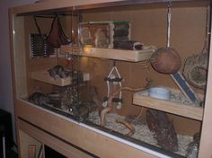 Cool degu cage, I like the way the platforms are setup