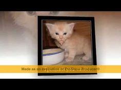 кошка — социальное животное, использующее для общения широкий диапазон з...