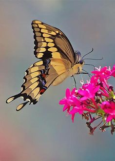 Mariposa by Sean Johnstone