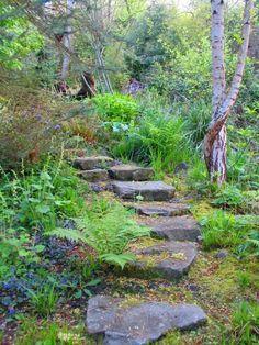 woodland gardening ideas