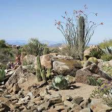 Naturalistic Desert Garden - Phoenix Home & Garden
