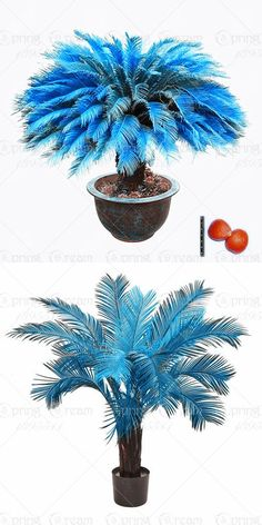 [Visit to Buy] 1pcs/bag blue Cycas seeds, Sago Palm Tree seeds.bonsai flower seeds,the budding rate 97% rare potted plant for home garden #Advertisement