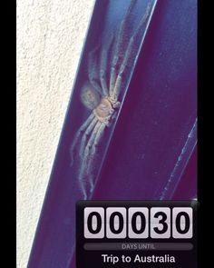 Nicht mehr lange!  #triptoaustralia #australia #downunder #greatoceanroad #30daysleft #spider #hairylegs #ihhh #haarig by juli_frytg