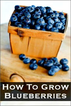How to Grow Blueberries In A Pot     http://smallgardenideas.net/how-to-grow-blueberries-in-a-pot/