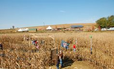 Cherry Crest Farm/Amazing Maize Maze • Insider Tip: A great outdoor activity for a group of friends, especially at night.