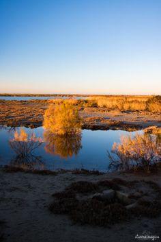 La Camargue en hiver. Soleil couchant sur les marais aux Saintes Maries de la Mer