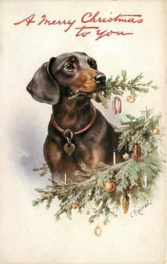 "Set Title: -Favourite Dogs -First Use: December 24, 1909  -Set Comment:::-Oilette  -Processed in Bavaria for Raphael Tuck & Sons -Sold: Great Britain, France -Paper Cut-outs -Card Comment: Print in red ""A Merry Christmas to You"" or ""Christmas Greetings"" -Artist: C. REICHERT -Card Title: DACHSHUND CHEWS SPRIG OFF CHRISTMAS TREE"
