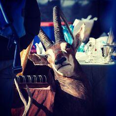 #gauelle #fleamarket #linz #austria #lnz #tierwelt #wildlife #hunting #gazella #linzpictures #forsale #cheap #flohmarkt #dead #lostandfound #fundstück #tier #animal #wildlifephotography #markt #market #igersaustria #canon #pickoftheday