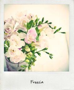 les-fleurs-du-mois-d-aout-la-mariee-aux-pieds-nus