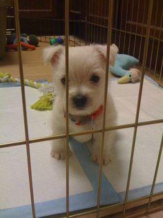 Bentley as a puppy.