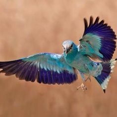 Mystery Bird of July 2013