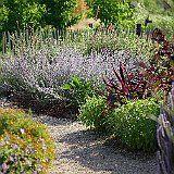 herbes aromatiques au jardin de 5 sens.JPG