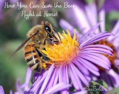 Bee Bold