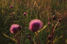 Herkkupurkki: valokuva, summer night, Finland, sun set