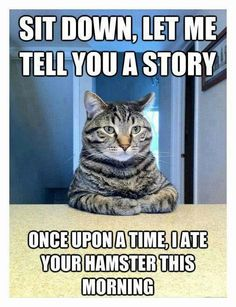 Sit down, let me tell you a story... once upon a time, I ate your hamster this morning #lolcat #riphamster