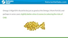 http://NaturesWellLabs.com Due to the recent shortage of fish sources for Omega-3 Oil, it makes sense to look at another source which may be more beneficial for those with certain health problems. Buy 100% (HMC) Halal Certified Vitamins & Supplements Now. Visit NaturesWellLabs.com Like Natures Well Labs on Facebook: https://www.facebook.com/Natures-Well-472239319612739/ Find More Information on Living a Healthier Life with Halal Certified Vitamins: http://www.slideshare.net/NaturesWell