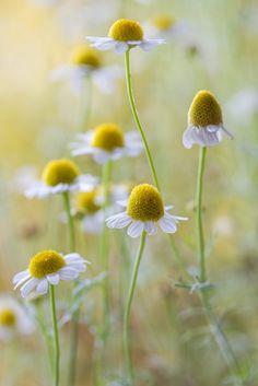 SPRING - FLOWERS ( Guardado por MAVI )