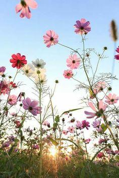 Simplicidade em forma de flores