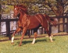 """Secretariat    """"Weave for the mighty chestnut   A tributary crown   Of autumn flowers, the brightest then   When autumn leaves are brown   Hang up his bridle on the wall,   His saddle on the tree,   Till time shall bring some racing king   Worthy to wear as he!"""""""
