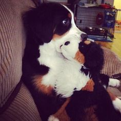these are all way too freakin cute, i love them all! (pictures of animals w/ stuffed animals of themselves)