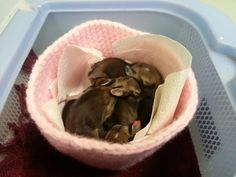 Crochet nests for baby wildlife   http://wildliferescuenests.weebly.com/