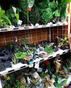 Having nice decor in your pets home is so easy, pretty and good for them! 🦎🐍🐢🐸 Visit our store or check our site to view all the possibilities to create a great environment for your reptiles! #MagazooReptiles Reptile Accessories, Pet Home, Reptiles, Aquarium, Environment, Pets, Nice, Create, Store