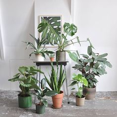 for plants lovers : Studio Joop.