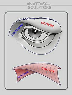 Exceptional Drawing The Human Figure Ideas. Staggering Drawing The Human Figure Ideas. Facial Anatomy, Eye Anatomy, Human Anatomy Drawing, Anatomy Study, Anatomy Art, Anatomy Reference, Drawing Reference, Pose Reference, Draw Tutorial