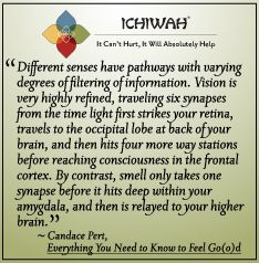 Different senses have pathways with varying degrees of filtering of information. Vision is very highly refined, traveling six synapses from the time light first strikes your retina, travels to the occipital lobe at back of your brain, and then hits four more way stations before reaching consciousness in the frontal cortex.  – Candace Pert, Everything You Need to Know to Feel Go(o)d