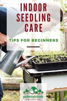 How To Care For Vegetable Seedlings Indoors Tips Tricks for growing strong vegetable seedlings indoors Starting Vegetable Seeds, Starting Seeds Indoors, Seed Starting, Home Grown Vegetables, Organic Vegetables, Growing Vegetables, Organic Gardening, Gardening Tips, Sustainable Gardening