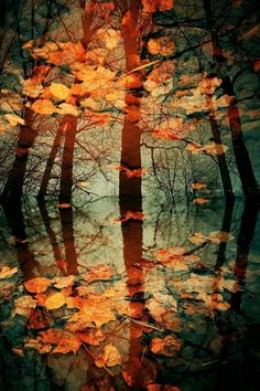 Autumnal, Colour, Palette, Leaves, Change, Season, Inspiration, SDC, Hand Embroidery
