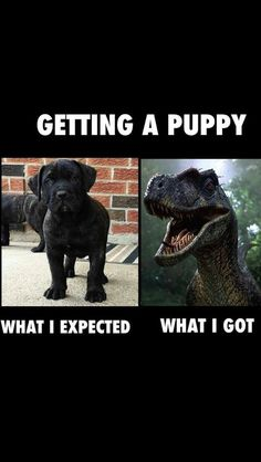 Have Dog Behavior Problems? Learn about Dog Behavior Shaking Toys and Dog Training Courses Dublin. Pet Dogs, Dog Cat, Doggies, Training Your Puppy, Training Tips, Training Online, Potty Training, Training Courses, Training Schedule