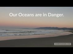 FOLLOW SHORE BUDDIES || HELP MAKE A DIFFERENCE - YouTube Planets, Places To Visit, Ocean, Make It Yourself, World, Amazing, Beach, Water, Youtube