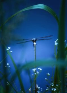 dragonfly - The colors, the detail & depth of field all come together for an amazing result.