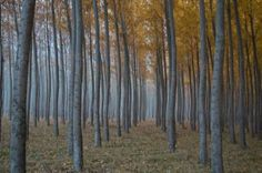 """Saatchi Art Artist MC Reardon; Photography, """"In The Wood, #2 (print #1 in limited edition of 25)"""" #art"""