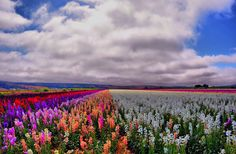 1. Valley of Flowers by Lawrence Goldman