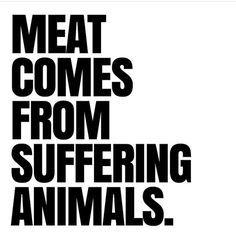 SelflessRebel.com - Vegan Apparel & accessories why finance cruelty - go vegan for cruelty-free living #vegan