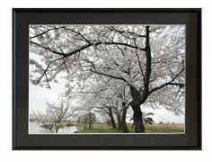 撮影地:新潟県阿賀野市瓢湖 ★桜           2008/4/13撮影瓢湖湖畔の桜並木です写真は銀映プリントを使用しています※掲載の額入り写真はハメコミ...|ハンドメイド、手作り、手仕事品の通販・販売・購入ならCreema。