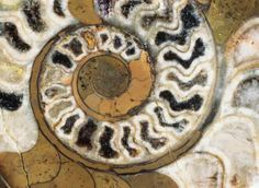 feng shui ammonite - Art Wolfe/Getty Images http://fengshui.about.com/od/Crystals/f/Ammonites-and-Feng-Shui-Ammolite.htm