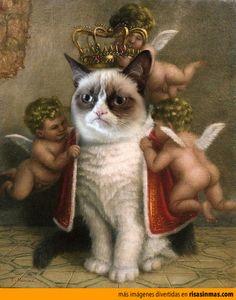 Su alteza Gato Cabreado. Podéis coronarme...