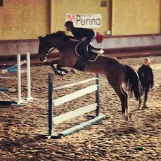 Cecconi Veronica Show Jumping, Veronica, Passion, Horses, Animals, Italia, Animales, Animaux, Animal