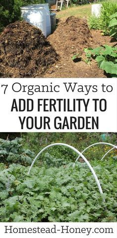 Grow more food, have healthier soil and fewer pests when you add fertility to your garden with one of these 7 organic methods: Cover crops, compost, urine, organic amendments, teas, mulch, and whey. | Homestead Honey #gardeningorganic